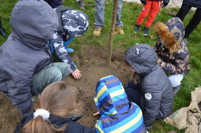 """Акција """"Дрво генерације"""" има за циљ да развије еколошку свест код најмллађих суграђана"""